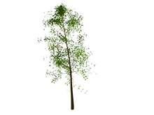 trees3
